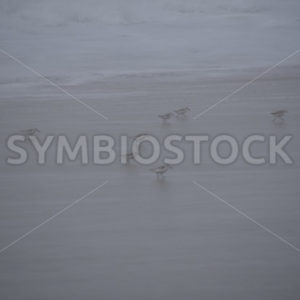 Birds In The Mist.JPG - Cliff Roepke